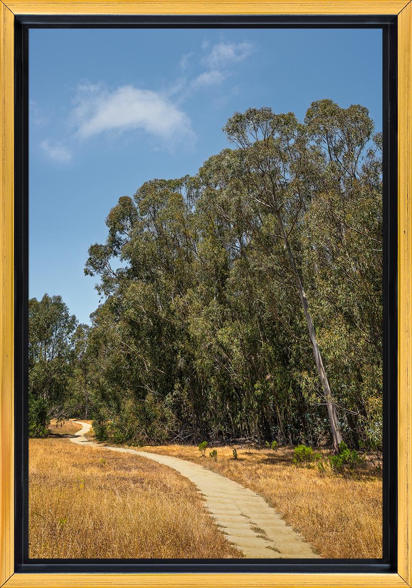 Eucalyptus Grove .jpg
