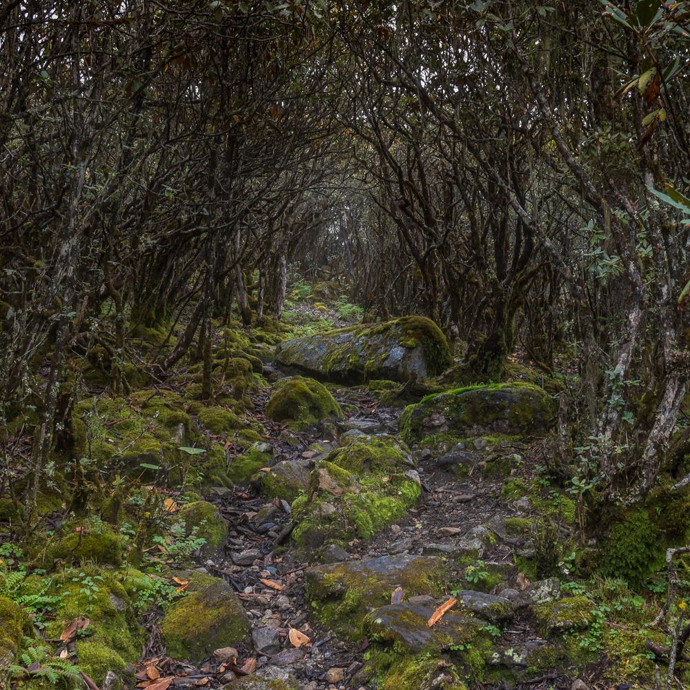 overgrown-trail.jpg