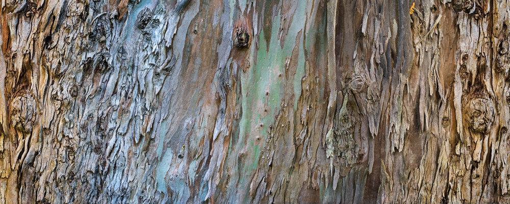 Eucalyptus 370°