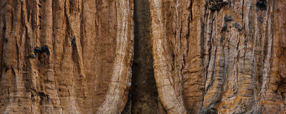 Giant Sequoia 320°