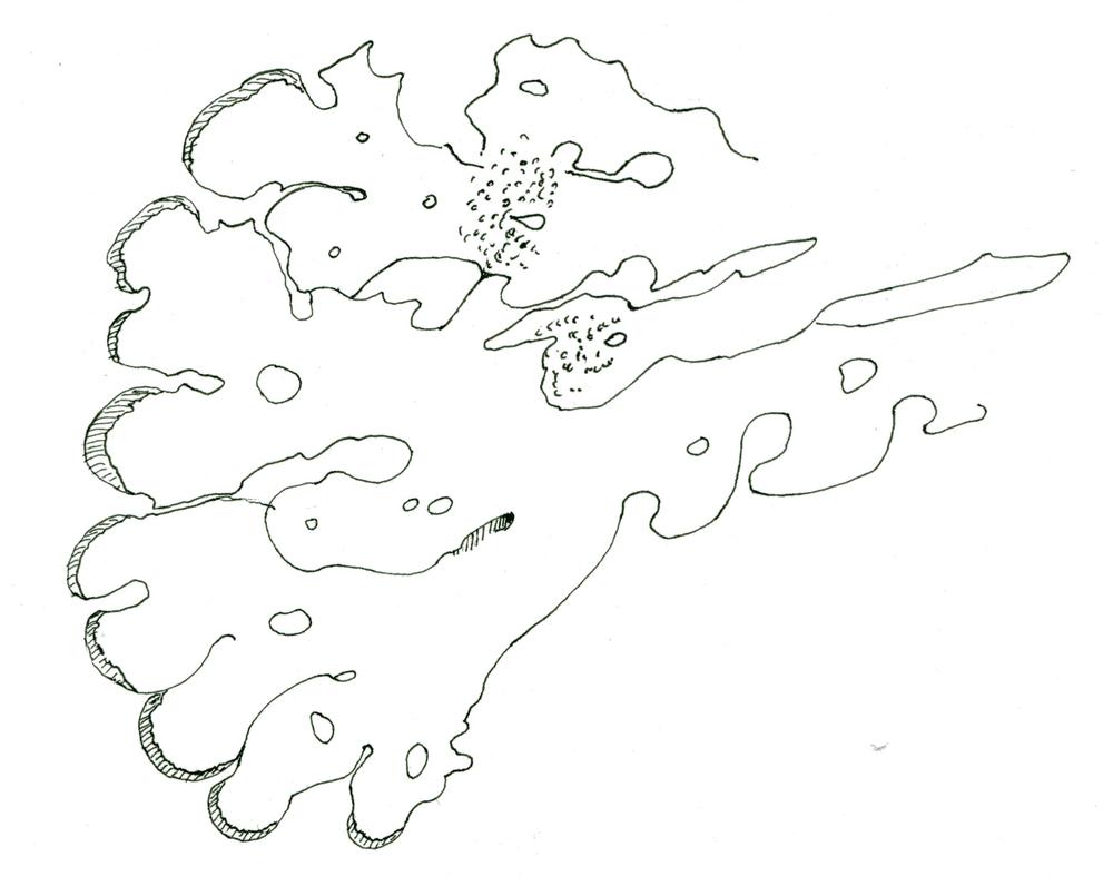 lichen063.jpg