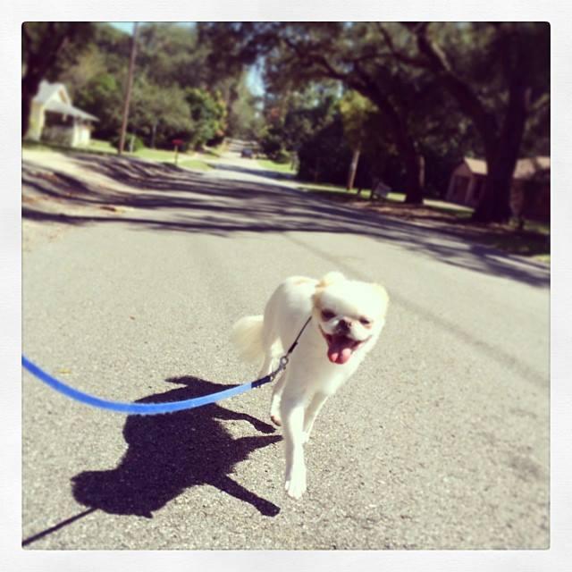 Timmy formerly refused to walk on leash