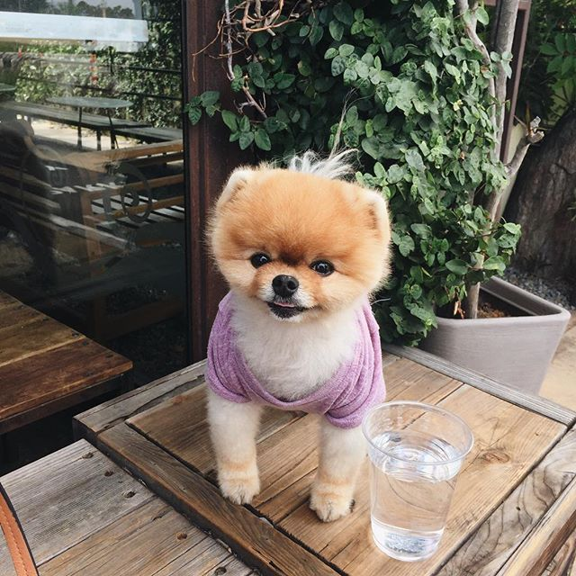 @jiffpom stopping by today 💅