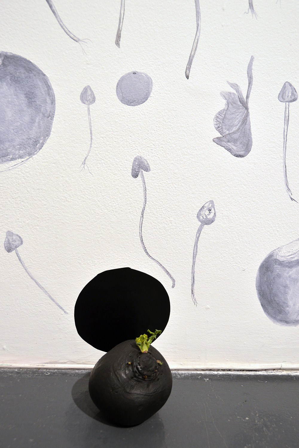 """sprouted black turnip"" (detail) site-specific installation with watercolour wall-drawing, common rutabaga, paint, sin, and curses, 2016"