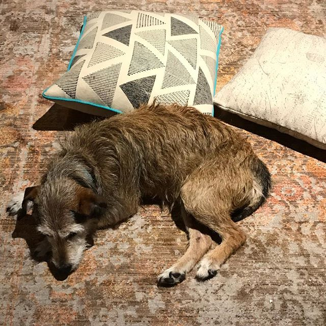 Lucy on the rug with triangles  #sadsongs #dogsongs #lucy #lucifur #toomanykidsforonedog #chocolatefountain