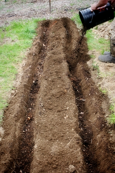 Dave planted potatoes.