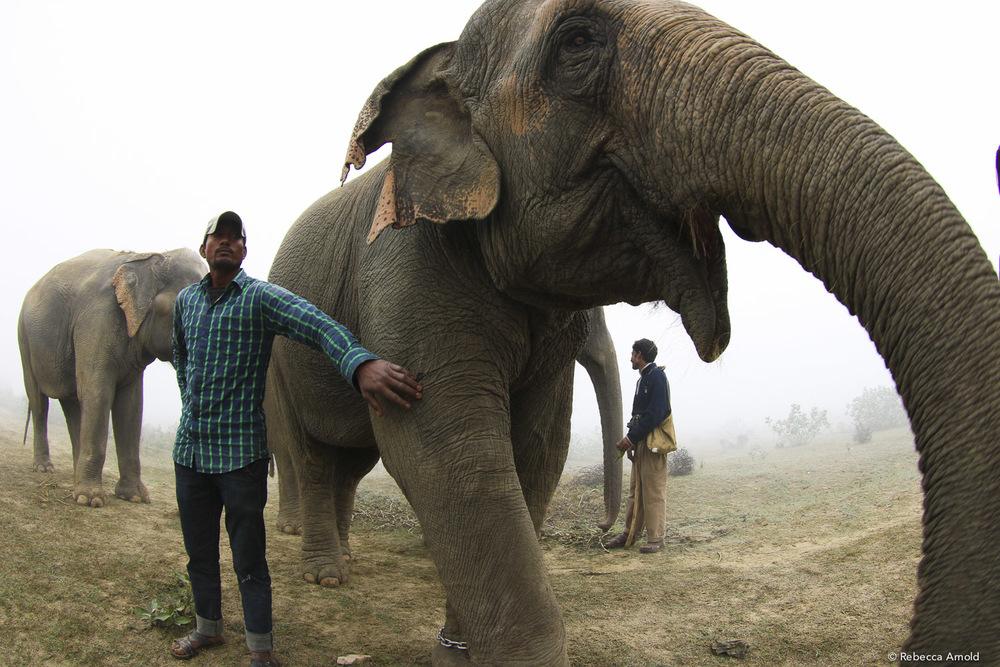 RArnold_2015India_IMG_1325.jpg
