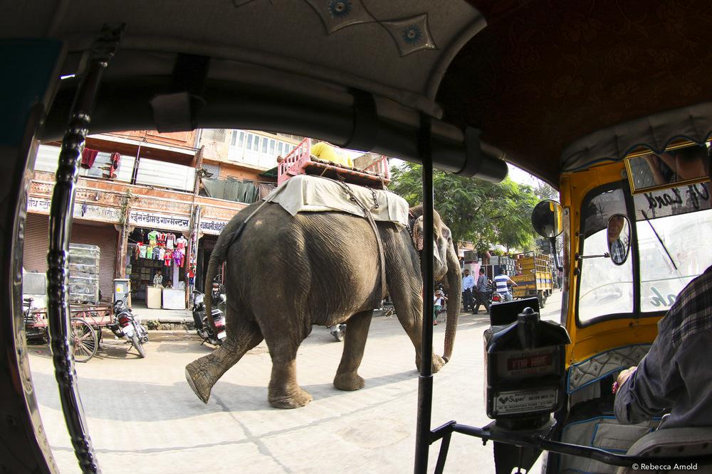 RArnold_2015India_IMG_5422.jpg