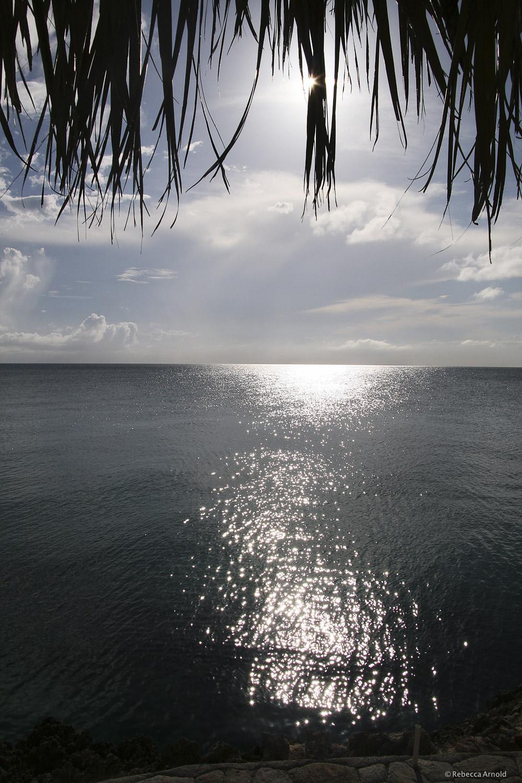 RArnold_2016 PGS_Farber Pitch_2009_Caribbean_Eleuthera_IMG_0552.jpg
