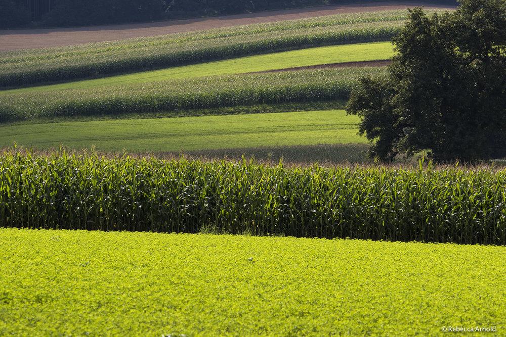 Corn & Clover, Austria