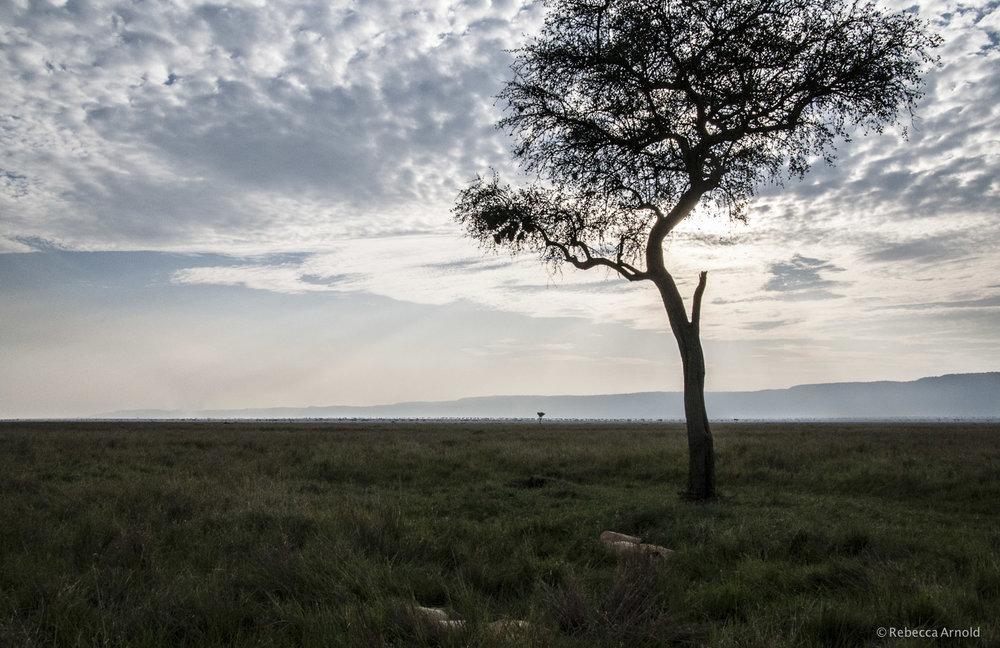 Maasai Mara Sky, Kenya