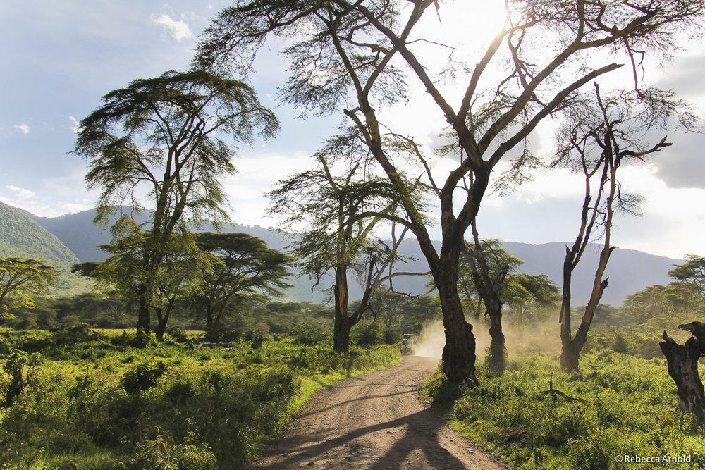 Light Through Acacias, Tanzania