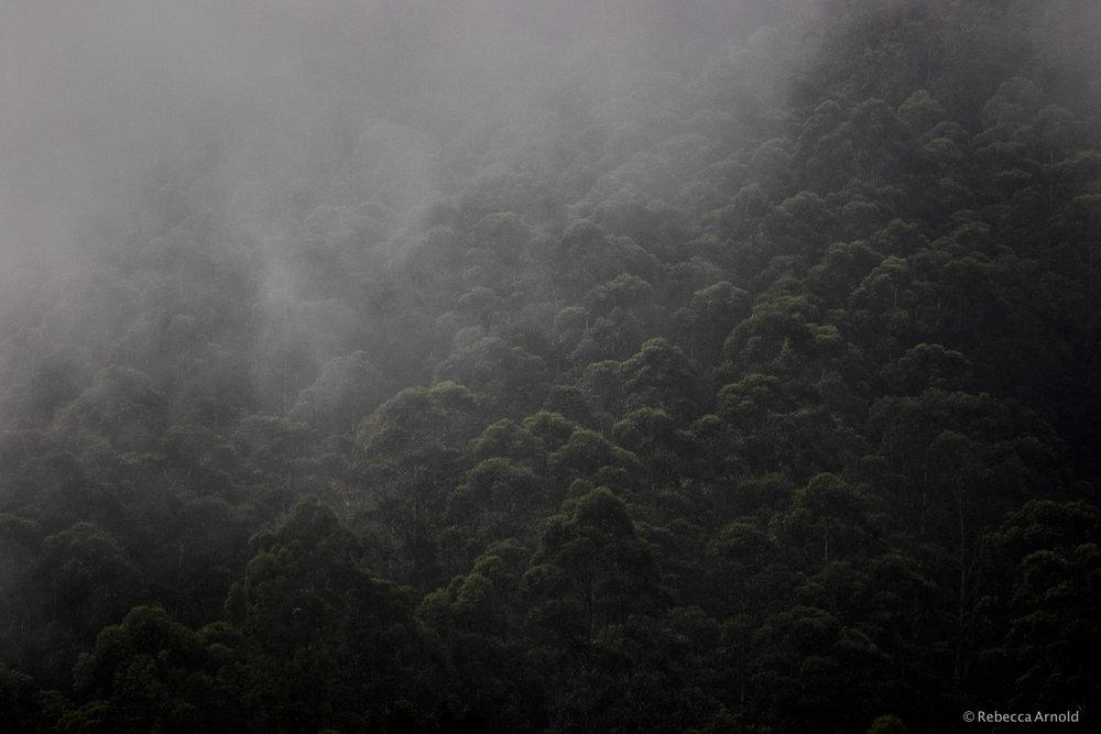Munnar Mist, India