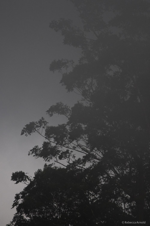 Eucalyptus Mist, India