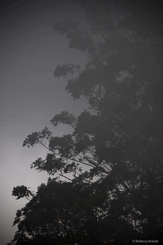 "Eucalyptus Mist, India 2015  16"" x 24"" | 24"" x 36"" | Custom Sizes   PURCHASE  Archival Pigment Print  Edition: 150"