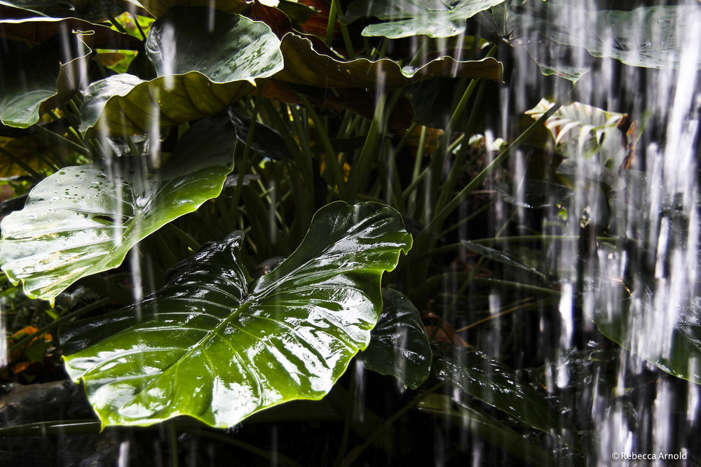 "Tropical Rains, Austria 2012  16"" x 24"" 