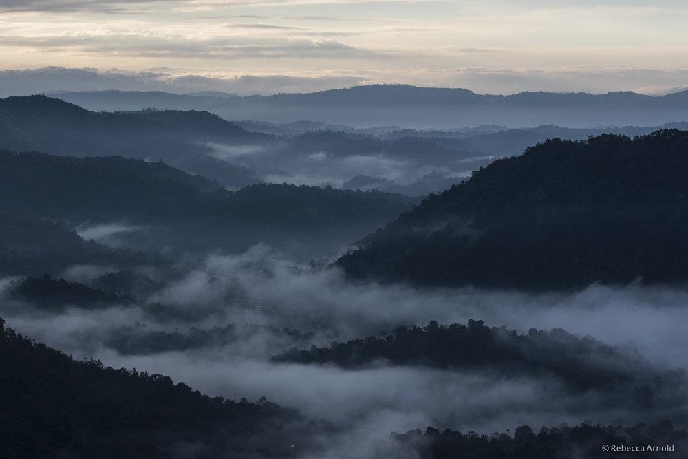 Dawn's Mist, Munnar, India