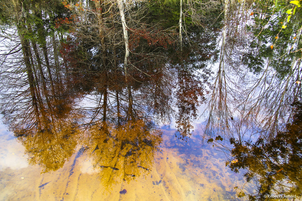 """Forest Reflections, Florida, USA 2012  16"""" x 24"""" 