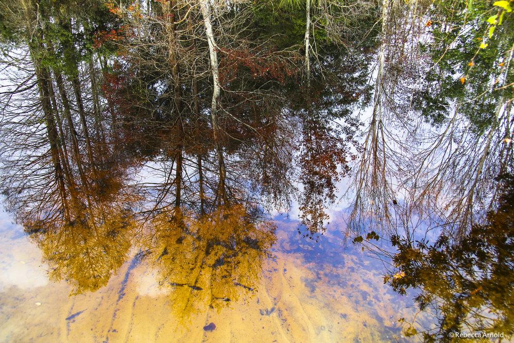 Reflecting Forest, Florida, USA