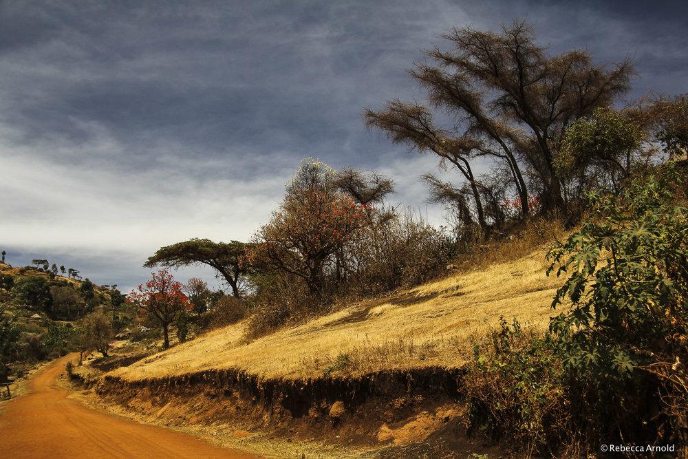 "Acacia Trail, Uganda 2011  16"" x 24"" | 24"" x 36"" | Custom Sizes   PURCHASE  Archival Pigment Print"