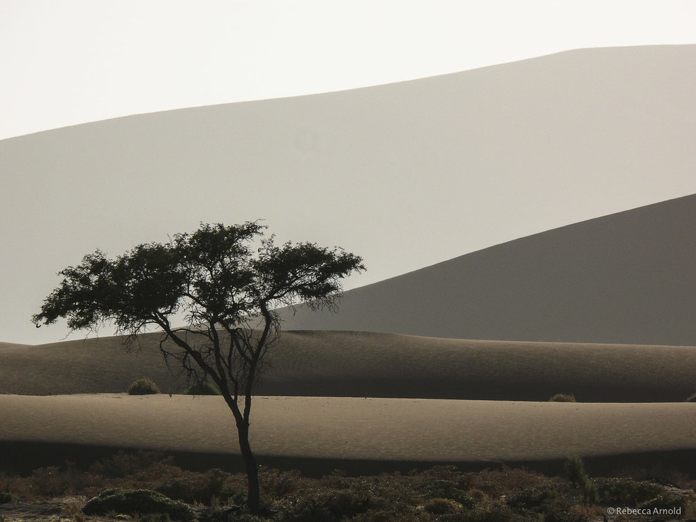 Dunes And The Acacia, Kalahari Desert, Namibia