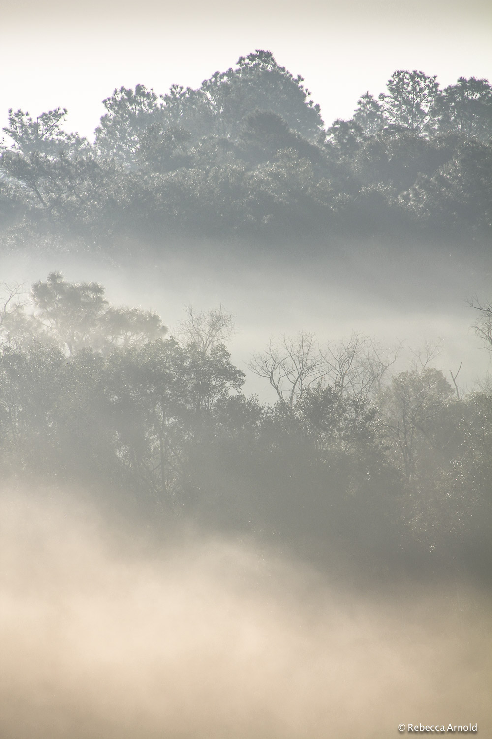 "Soft Fog, Florida, USA 2012  16"" x 24"" 