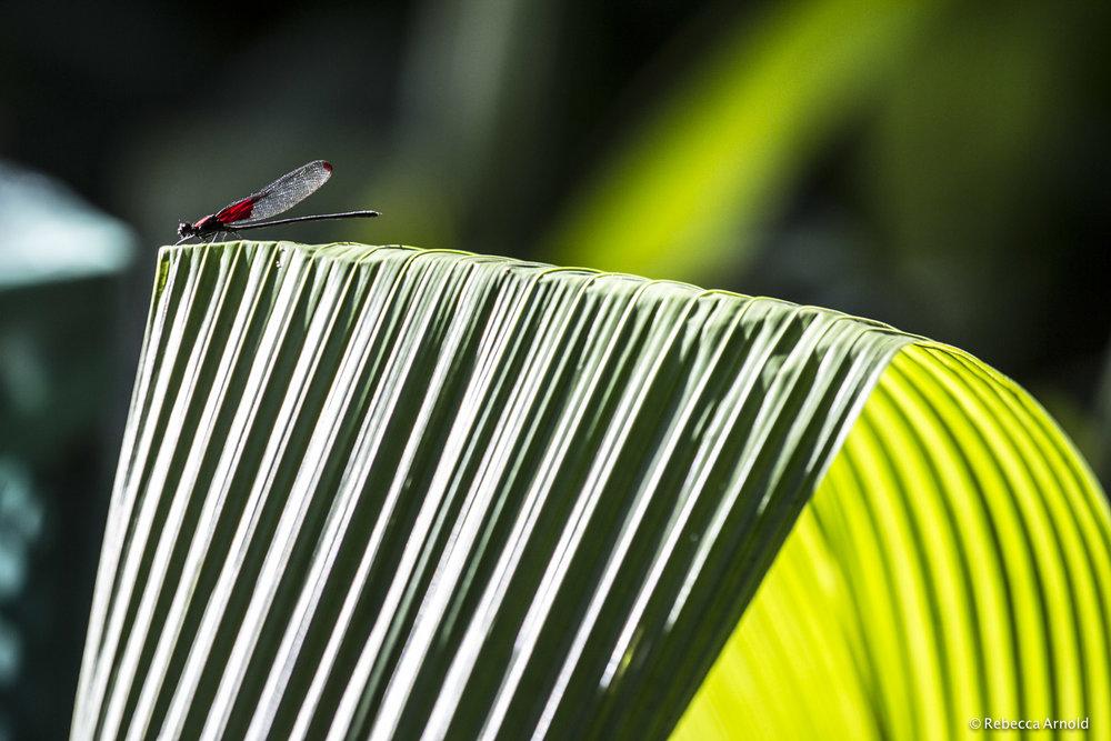 7. Basking in Rio, Brazil 2013