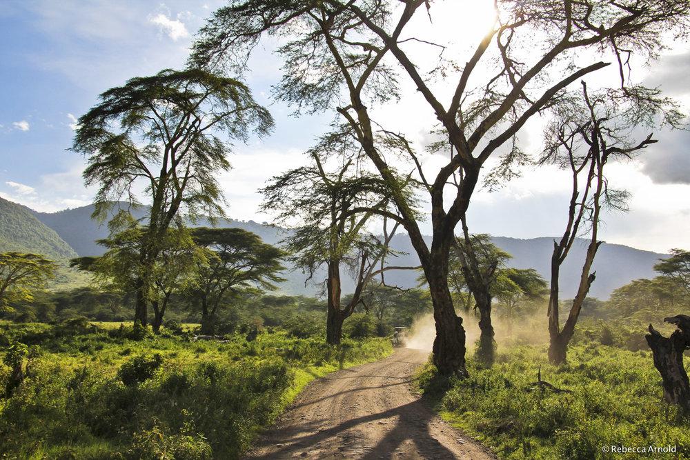 36. Acacia Alight, Tanzania 2011