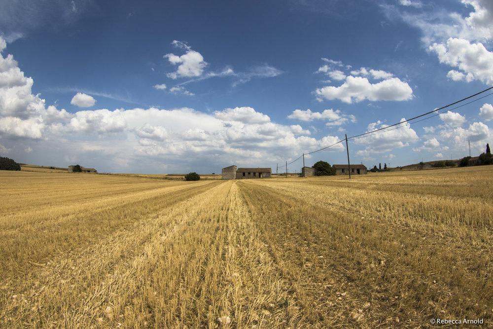 35. Open Harvest, Italy 2015