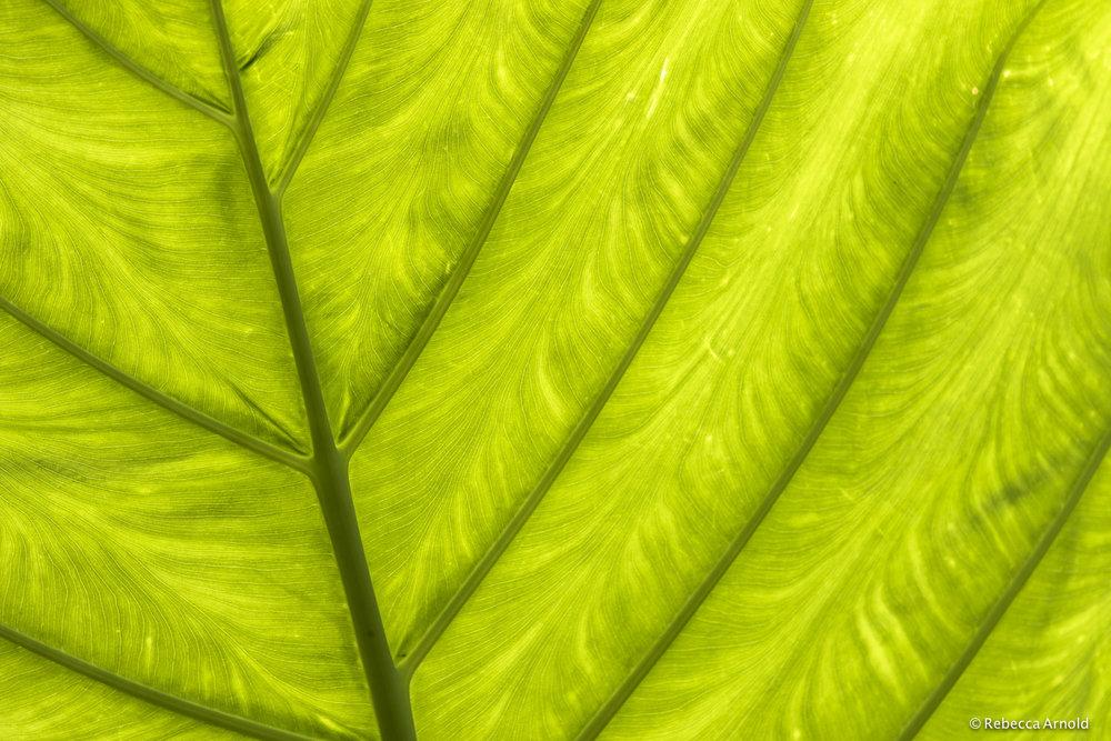 3. Leaf Alive, NY, USA, 2014