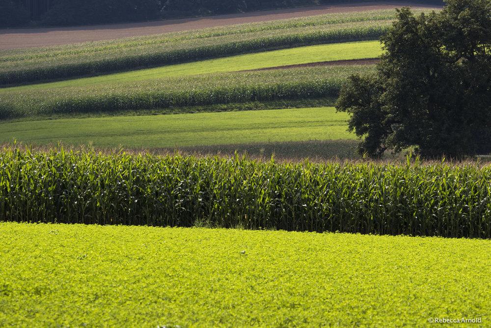 32. Corn & Clover, Austria 2016