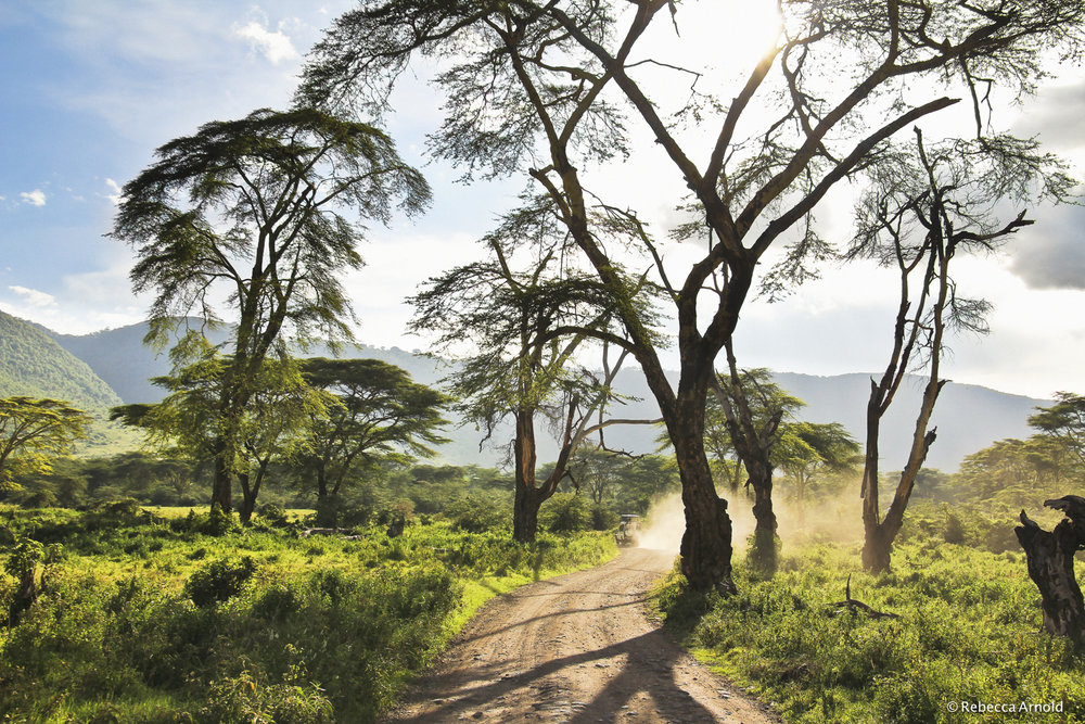 "Path In Eden, Tanzania 2011  16"" x 24"" 