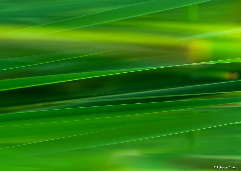 "Electric Greens, Michigan, USA 2018  16"" x 24"" 