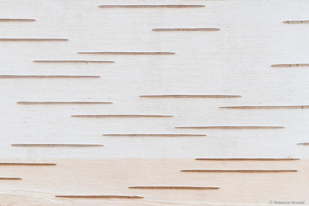 "Zen Birch, NY, USA 2018  16"" x 24"" | 24"" x 36"" | Custom Sizes   PURCHASE  Archival Pigment Print  Edition: 150"