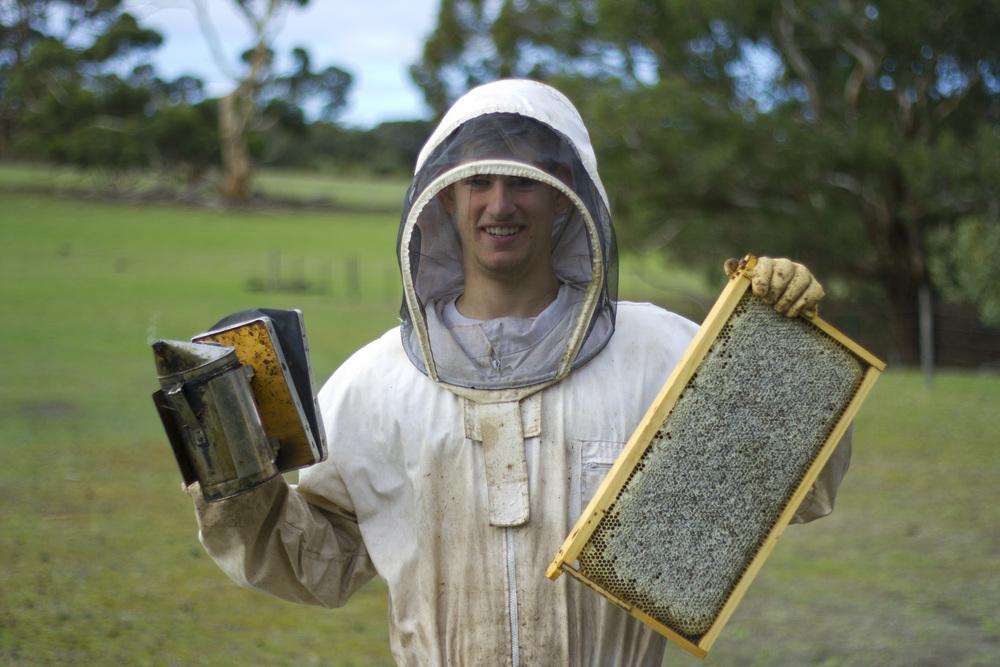 Beekeeper Beginner.JPG