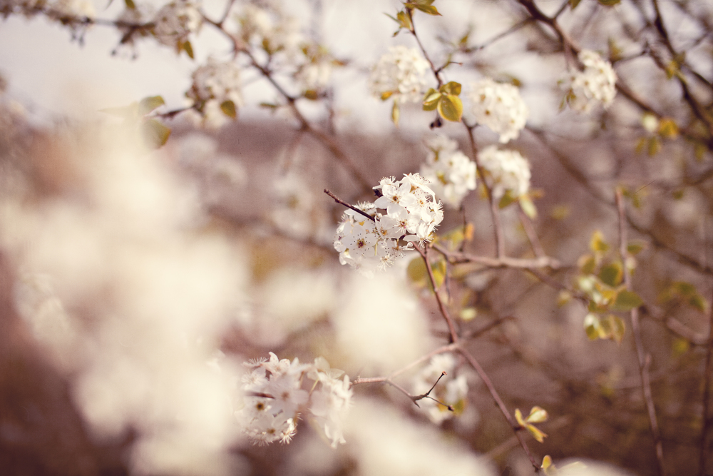 Spring Lovely - by Revival Photography