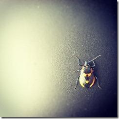 """""""Halloween Bug"""""""