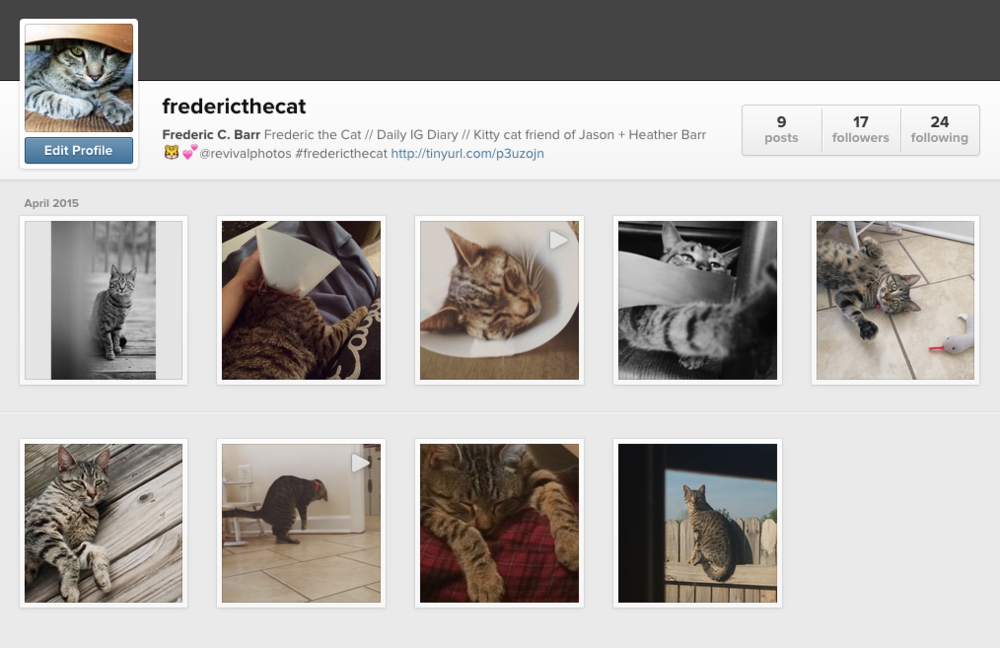 Follow Frederic the Cat on Instagram