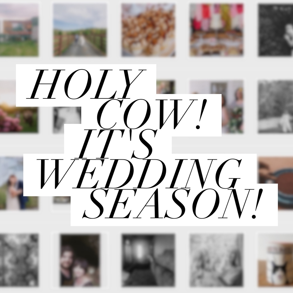 Holy Cow! It's Wedding Season! - An Update from Revival Photography