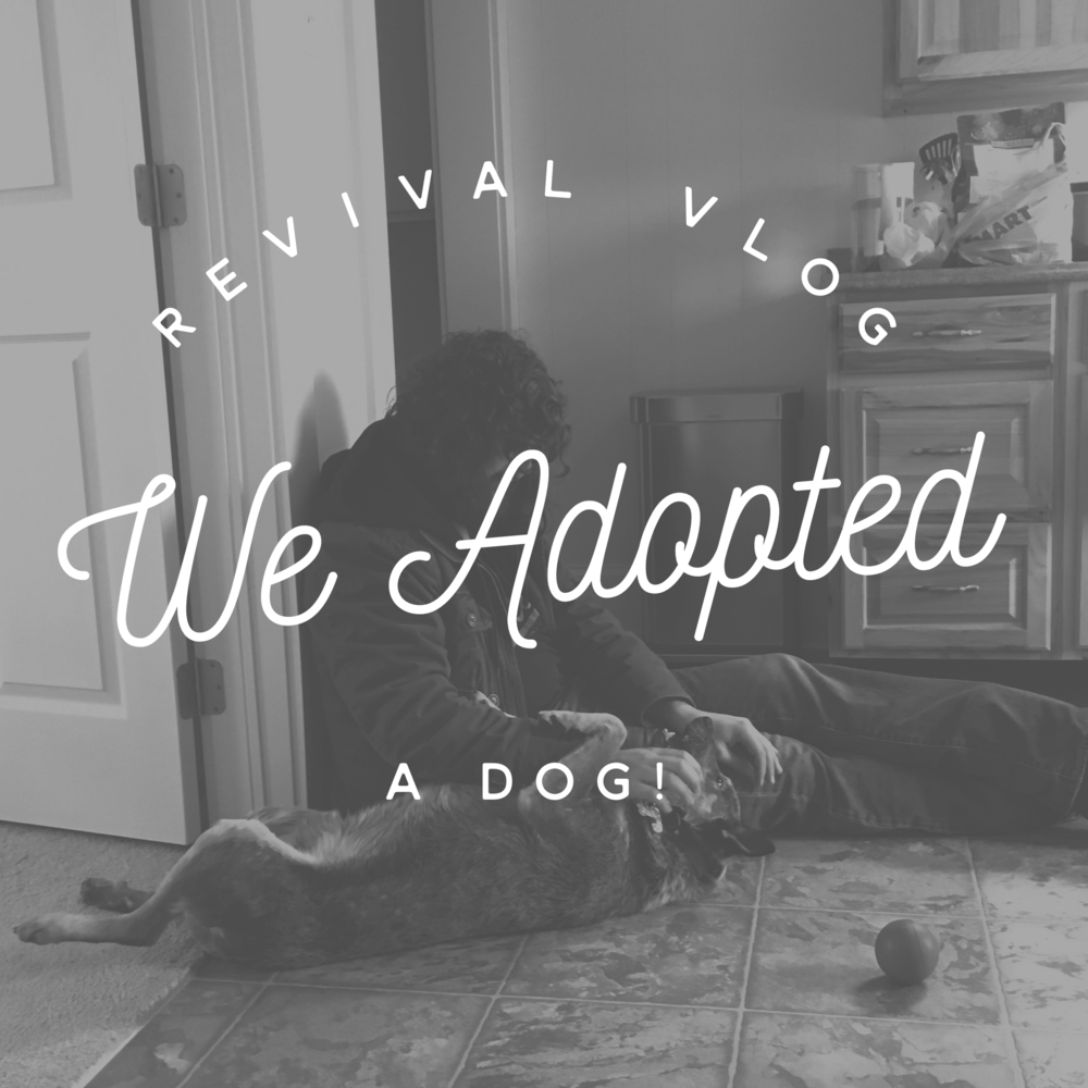 Revival Vlog: We adopted a dog! NC Wedding Photographers Revival Photography Personal Video Blog www.revivalphotography.com/blog