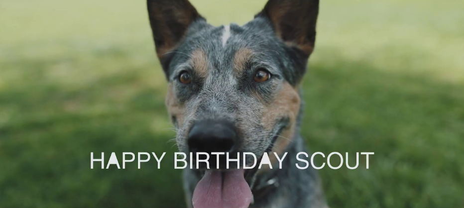 Happy Birthday, Scout! By Revival Photography