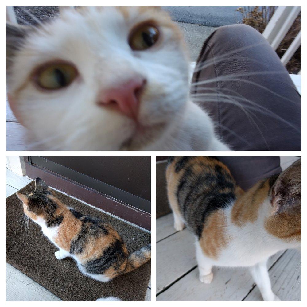 Neuer Katzenbesuch vor unserer Haustür