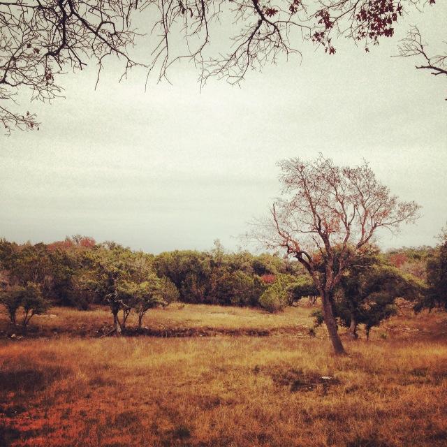 Restoring the Grasslands