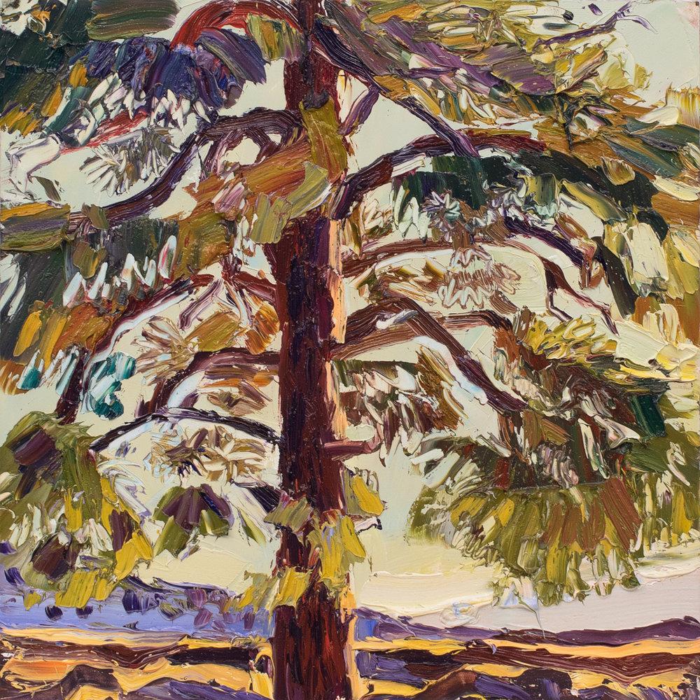 Lone Tree study