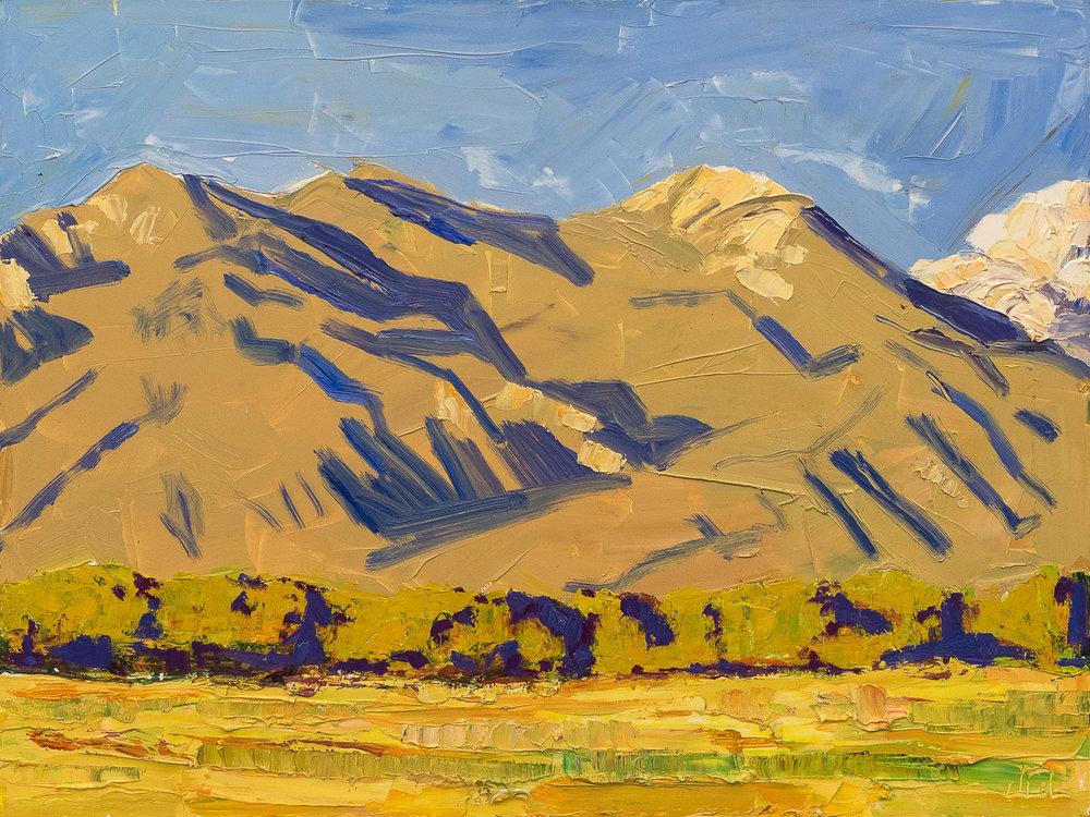 Taos Mountain - orange beard
