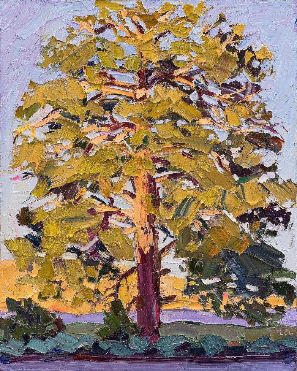 Lone Tree #4 - morning light