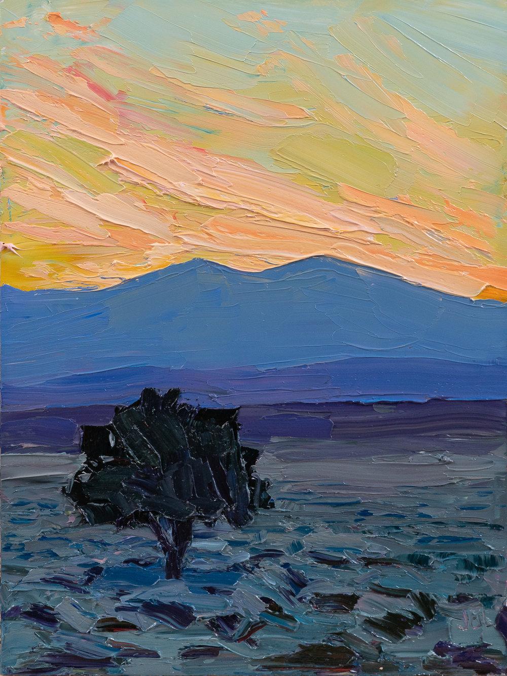 """The """"lone piñon"""" at dusk"""