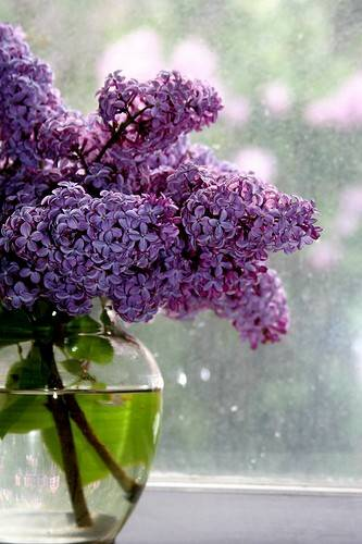 lilacs-vase.jpg