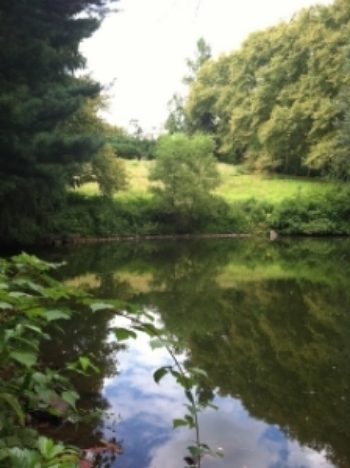 A pond at the lower end of the property