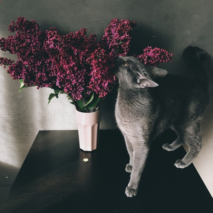 cats and flowers